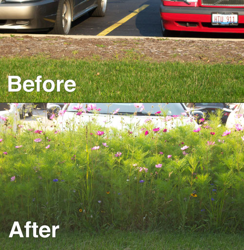 Wildflower seed mixtures national seed illinois wildflower before and after mightylinksfo