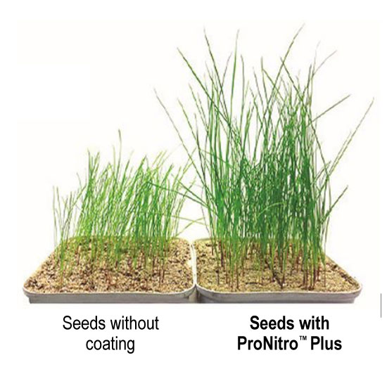 ProNitro Plus
