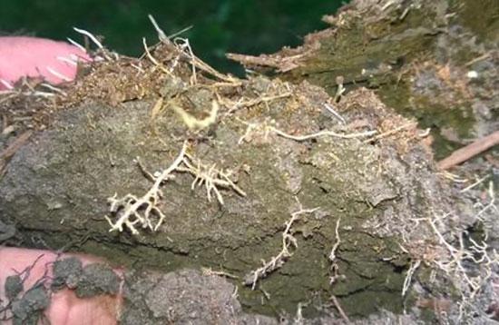 C20 Soil Builder benefits