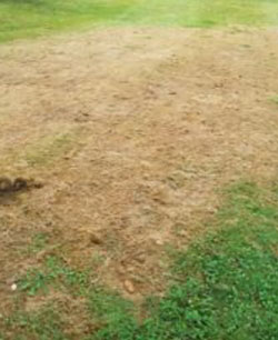 Turfgrass damage